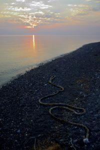 Un cordage abandonné sur une plage de Kos Grèce