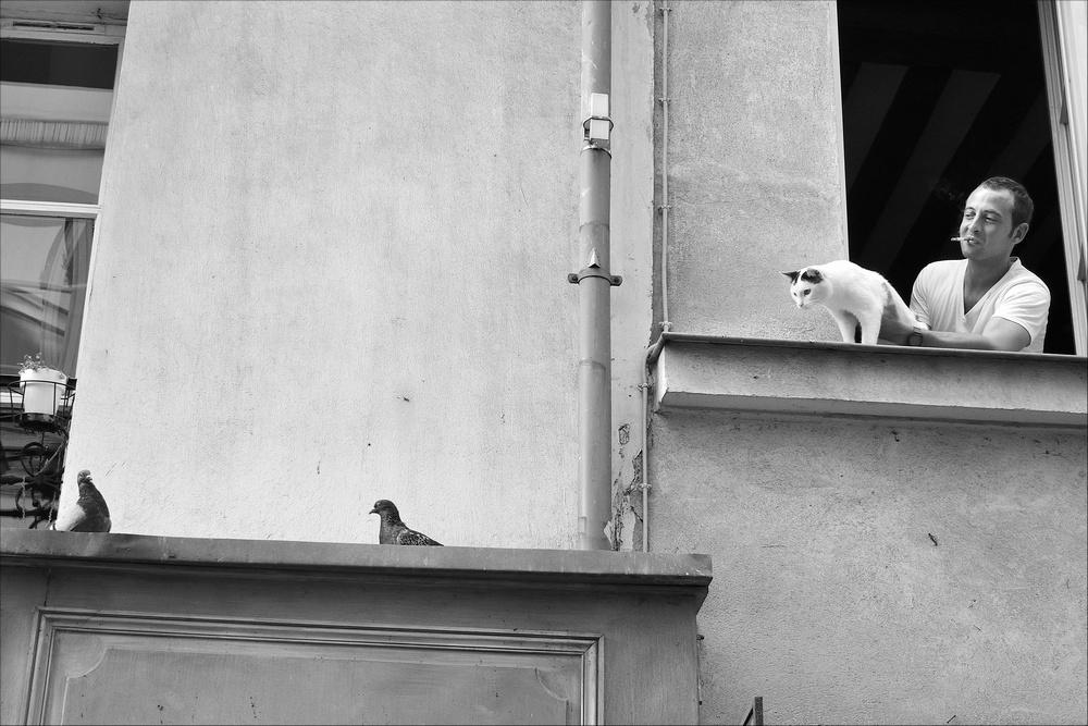 Un chat retenu par son maitre s'appretait a sauter sur des pigeons